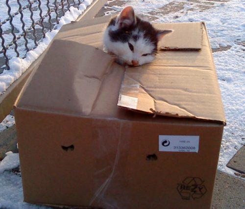 박스에 버려진 고양이