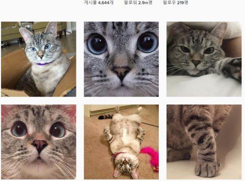 인스타그램 nala_cat