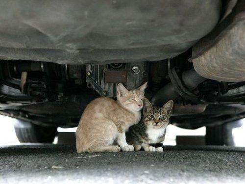 자동차 밑 길고양이들