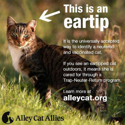 고양이 TNR 표시 홍보